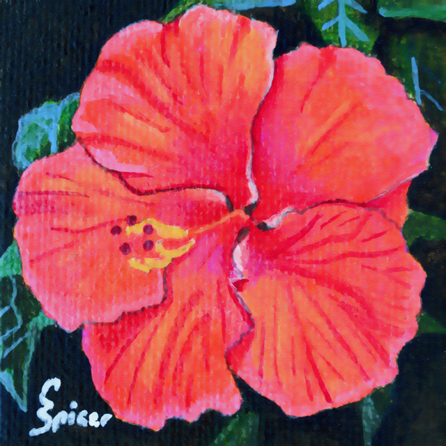 Red Hibiscus: Acrylic Painting by Christopher Spicer