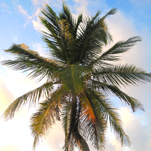 Palm Tree at Akumal Sur - Photograph by Christopher Spicer